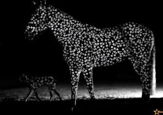 stanislas-zanko-cheval3
